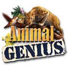 Animal Genius oyunu